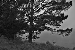 Marine#5 (Art-is-true) Tags: california blue trees people usa sun white black art nature true fog clouds america landscape bay is marine san francisco top united hill area states