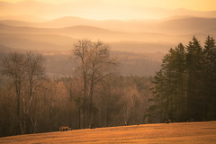 Golden turkeys moment... (Marla Nutbrown) Tags: trees light wild mountains fog sunrise landscape photography golden view scenic turkeys toms hens naturallightphotography marlanutbrownphotography