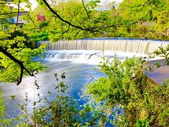 Long exposure on a 6s (Steve-h) Tags: longexposure blue trees ireland houses red dublin plants naturaleza sun sunlight white green nature leaves sunshine architecture digital river outdoors spring europa europe exposure riverside bright maroon branches south tripod natur may silk eu sunny natura waterfalls serenity frame framing satin silky weir riverbanks dodder 2016 steveh gorillapod riverdodder slowshuttercam jobytightgrip appleiphone6s