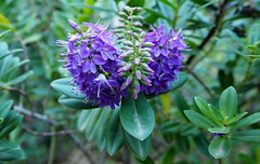 Maig al Parc de les Aiges (Barcelona) (tgrauros) Tags: blue verde green azul flora catalonia catalunya blau catalua verd flors maig catalogne parcdelesaguesbarcelona