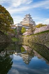Himeji-j (Cheng-Yang, Chen) Tags: reflection castle japan canon  sakura cherryblossoms hyogo himejicastle 6d     himejij  ef2470mmf4lisusm