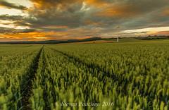Farmland At Sunset (Steven Peachey) Tags: canon6d canon ef1740mmf4l farmland countydurham landscape lee09gnd lee06gnd stevenpeachey