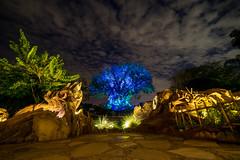 Animal Kingdom - It's Been a While (Cory Disbrow) Tags: waltdisneyworld treeoflife disneysanimalkingdom sonya7 rokinon14mmf28