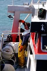 DSCF1489 (Jc Mercier) Tags: pche retourdepche fishermen marins cancale