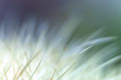 Stachelig (blichb) Tags: 2016 badenwrttemberg blhenderbarock kaktus ludwigsburg park schlossgarten sonya7rii zeissbatis1885 zwischenring abstrakt blichb sommer deutschland de haiku