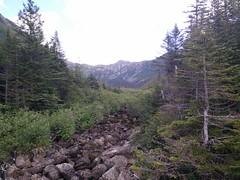 009 - Parc national de la Gaspsie : Lac aux Amricains (Arfphandal Forfal Forphan) Tags: trip qubec gaspsie forest tree arbre fort nature water eau park landscape