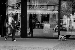 Pug life (rgreen_se) Tags: gotland sweden building camo city country do europe hat life light nordic overalls pet pug redneck stones street summer urban walking window reflection mirror outdoor blackandwhite monochrome