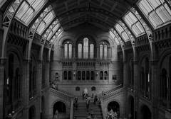 Open Plan... (CAMRA Man ...) Tags: london naturalhistorymuseum fujix10 staircase blackandwhite mono landmark