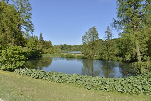 Le petit étang sous un ciel bleu