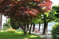 Lugano - Riva Paradiso (sandorson) Tags: travel schweiz switzerland ticino suisse suiza svizzera lugano lakelugano lagodilugano luganersee  svjc lacdelugano  sandorson   luganit
