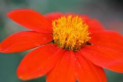 Red flower (LarryJay99 ) Tags: sunlight outside florida westpalmbeach canonefs60mmf28macrousm mountsbotanicalgardens canonefs60mmf28macrousa