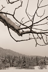 Vercors, 2016 (Olivier BERTRAND) Tags: blackandwhite nature monochrome forest canon landscape 50mm noiretblanc hiver naturallight neige dslr paysage vercors arbre fort digitalphotography blackandwhitephotography canon50mm canonef50mmf14usm isre canonlens 50mmcanon olivierbertrand canon5dmark2