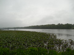 The Nanticoke River (jimmywayne) Tags: ferry woodland historic delaware sussexcounty nanticokeriver tinafallon