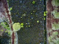 2215062016 (2c..) Tags: ireland summer  abstract tree landscape aerial peat land bog overhead 2c kildare digitalwatermarked
