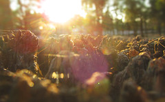 Ala orilla del sol (L4nders) Tags: botanica bosque luzysombras luz contraluz atardeser atardeses atmosfera naturaleza nature natural natura resplandor sol texturas tarde tronco tierra