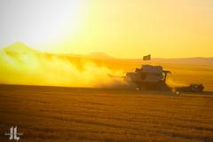 IMG_8427 (larzz4444) Tags: winterwheat gleaner combine chestermontana wheatharvest chester montana drylandfarming sweatgrasshills joplinmontana sunset