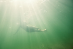 Underwater (chriscom) Tags: blue underwater woman fuji floating