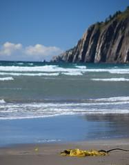 ...Kelp!... (djchphotography) Tags: oregon beach beautiful green blue kelp seaweed cliff bluff water ocean sea wet white brown rocky rock sandy sand natural nature naturaleza outside manzanita outdoor windy wind