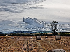 Beyond (Tobymeg) Tags: scotland farming crop harvest clouds hills sky grey