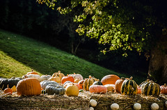 Knoll (Melissa Maples) Tags: ludwigsburg germany europe nikon d5100   nikkor afs 18200mm f3556g 18200mmf3556g vr residenzschloss palace blhendesbarock garden summer krbisausstellung pumpkins pumpkin festival green tree hill