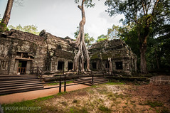 Ta Prohm Temple, Cambodia (Gabriela Nakayoshi) Tags: taprohn cambodia siemreap camboya asia d90 nikon temple tokinaatx116prodxii1116mmf28