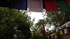Enjoying autumn rain with Tibetan Prayer Flags, Rosie, on the deck at A Garden For the Buddha, Broadview, Seattle, Washington, USA (Wonderlane) Tags: 20161008133507 enjoyingautumnrainwithtibetanprayerflags rosie onthedeckatagardenforthebuddha broadview seattle washington usa enjoying autumn rain tibetanprayerflags onthedeck agardenforthebuddha