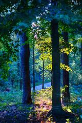 DSC05594-96_HDR (Capt Kodak) Tags: autumn chattahoocheerivernationalrecreationarea fall hdrefexpro2 madefrom3images medlockbridgepark nationalparkservice nikcollectionbygoogle niksoftware photomerge