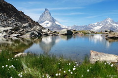 flowers und Matterhorn (welenna) Tags: alpen alps switzerland snow summer schwitzerland schnee see sky swiss stone flowers view landscape lake light licht riffelsee relief reflection reflexion berge blue mountains mountain matterhorn blumen