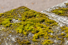 Moss On The Stone (AudioClassic) Tags: nature moss autumn green rock stone architecture tree forest outdoor fall natural closeup texture plant landscape environment bark wood wilderness lush close beautiful background peaceful rural wild trunk season nobody colorful woods foliage rotting autumnal