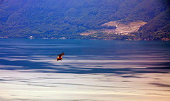 Crop duster (oobwoodman) Tags: lake alps alpes schweiz switzerland see suisse lac helicopter alpen leman lman lakegeneva hubschrauber hlicoptre genfersee