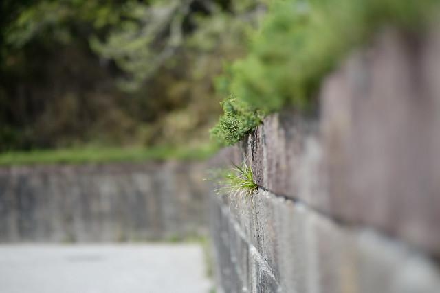 dainohara 09