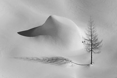 Two shadows (Pierpaolo.) Tags: artlibres