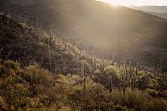 early morning, ridge view trail (bugeyed_G) Tags: morning arizona cactus southwest nature early view desert ridge trail vail saguaro altaloma bugeyedg