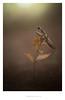 vers la lumière (Patrick GOUJON) Tags: france macro nature europe terre sujet couleur stade environnement vegetale mante languedocroussillon garrigue hérault localisation prisedevue méditerranéen lecrès exterieure languedocroussilon thesauruspatrick adulteimago invertébréanimaleanimalanimauxanimauxinvertébréssquele macrophotographiemacrophotographymacrographyproxymacroprox macrophotographiemacrophotographymacrographyproxymacroproxyproxyphotographieproxiphotographiegrosplan