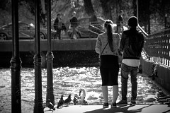 Tranquilli, siamo qui noi. (Sofía Postigo) Tags: shadow blackandwhite france alps annecy blancoynegro water monochrome leather alpes river french monocromo duck lightsandshadows agua couple eau shadows pareja amor ducks amour copia silueta savoie francia siluetas canard cisne swann greyscale silouettes canards cuero rhonealpes saboya lesalpes alpesfranceses