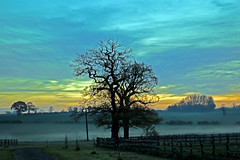 Misty Morning by Teresa Cooper (tc2084) Tags: morning mist tree fog photography countryside sleepy essex teresacooper