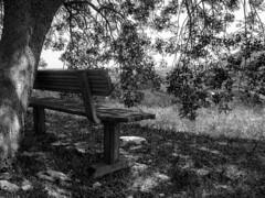 senza tiltolo (conteluigi66) Tags: relax ombra natura erba albero calma pianta panchina ombreggiatura ombreggiato rilassare rilassarsi paeraggio luigiconte