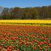 Dutch+Spring