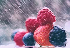 Ich wrde nicht sagen, dass ich ein Spielkind bin, aber ich habe noch nie vergessen, das Obst zu waschen. (Manuela Salzinger) Tags: water rain fruit strawberry wasser blackberry blueberry raspberry frucht regen erdbeere obst brombeere heidelbeere himbeere