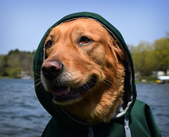 lake alex hoodie nikon funny day michigan humor olive pure banks gowen d3300
