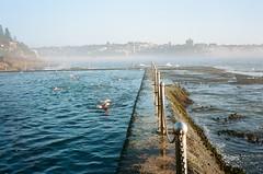 Wylie's Baths (Robert Ogilvie) Tags: sydney australia contaxt oceanpool