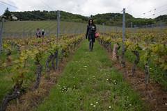 Querfeldein (Sven Vietmeier) Tags: suisse vignoble wein weinberg vaud 2016 lacte cavesouvertes cavesouvertesvaudoises
