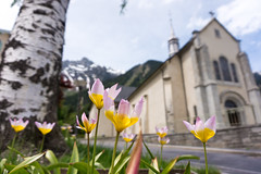 Chamonix (sabrandt) Tags: flowers church outdoor savoie chamonix montblanc rhonealpes