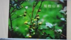 DSC07574 (yongheecs永和社大生態保育社) Tags: 林場