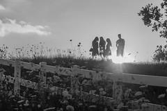 Stalker (rosepuddle) Tags: silhouettes ghostly quuenanneslace sunset wisconsin popefarmspark fenceline