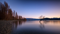 Dawn at Wanaka (Pat Charles) Tags: newzealand wanaka tree lake otago mountains alps southern queenstown cadrona snow hills trees birds nest nikon longexposure tripod reflection reflected reflections water nz edge rocks skimmers dawn sunrise morning early bluehour