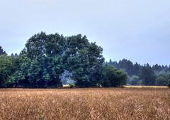 The Gate (Claude@Munich) Tags: germany bavaria upperbavaria gate rapeseed canola bush trees claudemunich bayern oberbayern rapsfeld bume tor