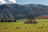 The Happiest Sheep in the World (Panorama Paul) Tags: paulbruinsphotography wwwpaulbruinscoza southafrica westerncape greyton overberg riviersonderendmountains sheep snow sunrise nikond800 nikkorlenses nikfilters panorama