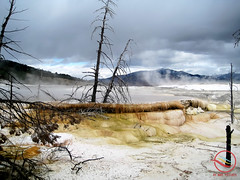 Mammoth Hot Springs Terrace (My Wave Pictures) Tags: national hot park yellowstone nature wyoming mammoth spring water landscape geothermal travel usa natural america rock white steam scenic terrace heat outdoors mineral famous volcanic landmark sky wilderness thermal springs limestone sulfur mountains geology