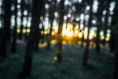 Mysteriously (wolfi8723) Tags: spider spinne spinnennetz nature wald wood sunset cobweb spinnenwben